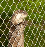 Otter behind fence Stock Images