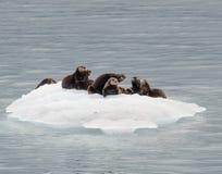 Otter-Bett 1 Lizenzfreie Stockbilder