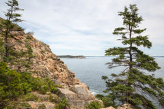 Otter Cliff in Acadia National Park USA Stock Images