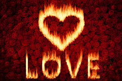Love fire. With red rose background Stock Photo