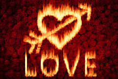 Love fire with red rose background Royalty Free Stock Photos