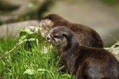 Otter delight Stock Photo