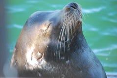Otter, der die Sonne genießt Lizenzfreie Stockfotos