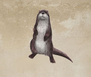 Otter. Digital toon  illustration of a otter Royalty Free Stock Image