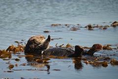 Otter hohe fünf Lizenzfreies Stockbild