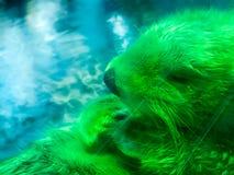 Otter mit der Persönlichkeitsaufstellung Stockbilder