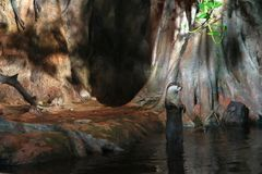 The otter stands upright on its hind legs in the water by the hole in the rock royalty free stock images