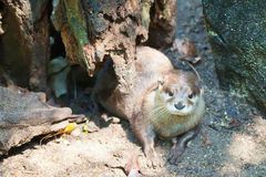An otter under the tree Royalty Free Stock Photos