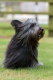 Otterhound che si siede nel campo Fotografia Stock Libera da Diritti
