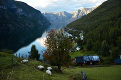 Otternes village near Flam in Sognefjord in Norway Royalty Free Stock Image