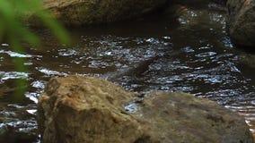 Otters die en in een vijverwater spelen zwemmen, 4k, ultra hd stock videobeelden