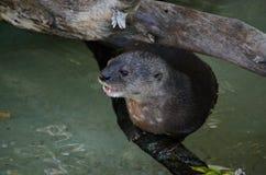 Otterzitting op een logboek royalty-vrije stock fotografie