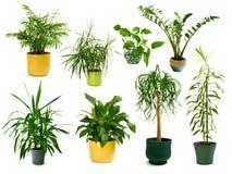 Otto piante d'appartamento differenti in un insieme Fotografie Stock