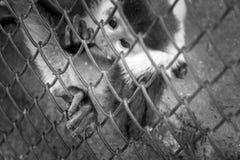 4 ottobre, giorno dell'animale del mondo Immagine Stock Libera da Diritti