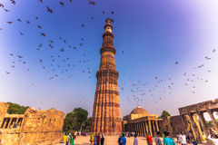 27 ottobre 2014: Uccelli intorno al Qutb Minar a Nuova Delhi, Indi Immagine Stock