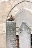 Ottoman tombstone and dove on pending Royalty Free Stock Photos