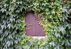 Otturatore ed edera della finestra sulla parete della casa Fotografia Stock Libera da Diritti