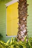 Otturatori gialli con il circuito di collegamento della palma Immagine Stock