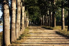 otwórz uliczny drzewa obrazy stock