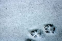 Otwarci ślada pies na pierwszy śniegu obraz royalty free