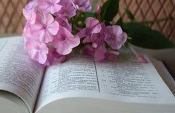 Otwarci biblii i bzu kwiaty Fotografia Royalty Free