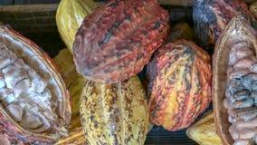 Otwarci cacao str?ki, fasole w Ekwador i zdjęcia stock