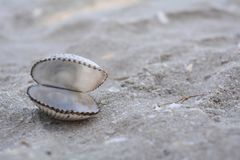 Otwarta skorupa na piasku Zdjęcie Stock