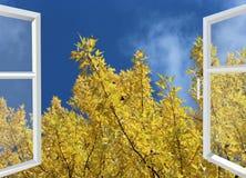 Otwarte okno żółty jesieni drzewo, niebieskie niebo i Zdjęcia Stock
