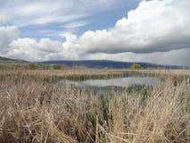 Otwarty Łąkowy grąz blisko McCall, Idaho obraz stock