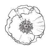 Otwarty chamomile okwitnięcie, odgórny widok, nakreślenie stylowa wektorowa ilustracja ilustracji