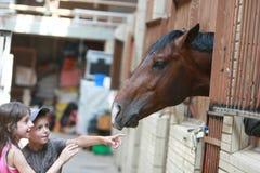 otwarty filiżanki equestrian Obrazy Royalty Free