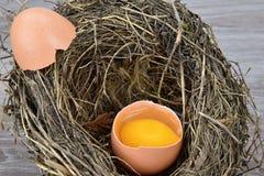 Otwarty jajko w ptaki gniazduje, łuska, lying on the beach na gniazdeczku Zdjęcie Stock
