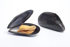 otwarty zamknięty gotujący mussel zdjęcie stock