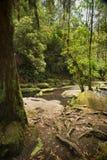 Otways National Park Stock Photos