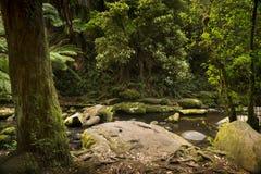 Otways National Park Royalty Free Stock Photo