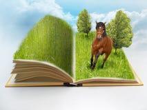 Otwiera książkę z naturą i koniem Zdjęcie Stock