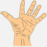 Otwiera palmy ręka z palcami rozprzestrzeniającymi Zdjęcia Royalty Free
