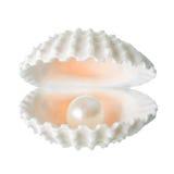 Otwiera pięknego miękkiego białego cockleshell z perłą odizolowywa dalej Fotografia Royalty Free
