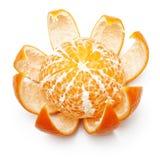 Otwiera pomarańczową owoc, mandarynka Fotografia Royalty Free