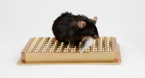 Otyła mysz na tubka stojaku Zdjęcia Royalty Free