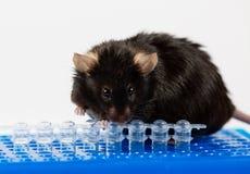 Otyła mysz na tubka stojaku Fotografia Royalty Free