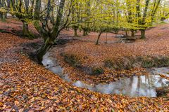 Otzarreta beech forest, Gorbea Natural Park, Spain. Otzarreta beech forest, Gorbea Natural Park, Basque Country, Spain royalty free stock photography