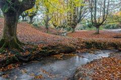 Otzarreta beech forest, Gorbea Natural Park, Spain. Otzarreta beech forest, Gorbea Natural Park, Basque Country, Spain royalty free stock photo