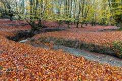 Otzarreta beech forest, Gorbea Natural Park, Spain. Otzarreta beech forest, Gorbea Natural Park, Basque Country, Spain stock image