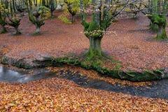 Otzarreta beech forest, Gorbea Natural Park, Spain. Otzarreta beech forest, Gorbea Natural Park, Basque Country, Spain stock photo