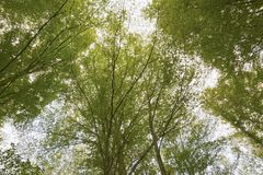 Otzarreta Beech Forest. Gorbea Natural Park. Basque Country, Spain Stock Images