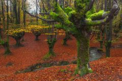 Otzarreta forest in Gorbea. Natural Park royalty free stock images