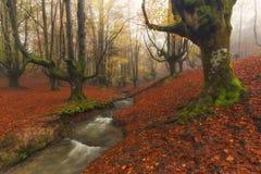 Otzarreta forest in Gorbea. Natural Park stock images