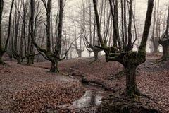 Otzarreta forest in gorbea natural park, basque country. Spain. Colorful autumn at otzarreta forest in gorbea natural park, basque country. Spain stock photography