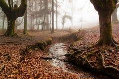 Otzarreta forest in gorbea natural park, basque country. Spain. Colorful autumn at otzarreta forest in gorbea natural park, basque country. Spain stock photo